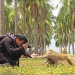 Monkey Festival at Monkey Island on June 4th